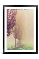 field in the fog, Framed Mounted Print
