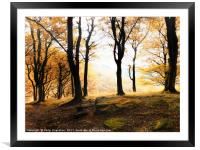 autumn forest sunrise , Framed Mounted Print