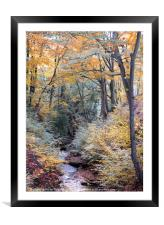 autumn woodland in beautiful seasonal colors with , Framed Mounted Print