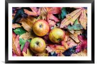 Apples on autumn leaves., Framed Mounted Print