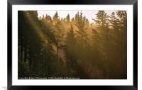 Sunbeams at Cragside, Framed Mounted Print