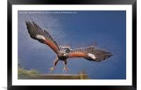 Launch the hawk, Framed Mounted Print