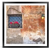 Geraniums in a window box, Framed Mounted Print