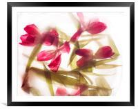 Transparent tulips , Framed Mounted Print