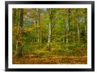 Autumn Colours, Framed Mounted Print