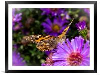 The Eye of the Painted Lady (Vanessa Cardui), Framed Mounted Print