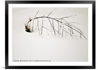 they simply won't give up, Framed Mounted Print