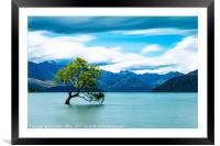 Lone Tree, Lake Wanaka, New Zealand, Framed Mounted Print