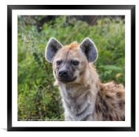 Spotted Hyena, Framed Mounted Print