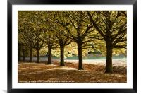 Tree lined path, Framed Mounted Print
