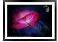 Poppy and Moon                              , Framed Mounted Print