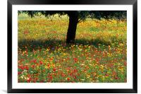 Mallorcan Wild Flowers, Framed Mounted Print