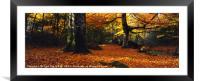 Devon Woods in Autumn, Framed Mounted Print