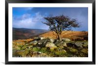 Tree at Combestone Tor, Framed Mounted Print