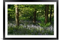 Bluebells, Cefn Coed 7, Framed Mounted Print