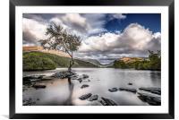 The Lone Tree - Llyn Padarn, Framed Mounted Print