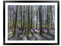 Shadows in the Trees, Framed Mounted Print