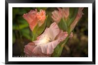 Gladioli Flower, Framed Mounted Print
