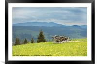 Dry old tree trunks stacked on green grass, Framed Mounted Print
