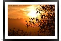 Sunrise looking through a hedge across a field in , Framed Mounted Print