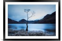 Buttermere Tree at Dawn, Framed Mounted Print