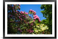 Colours of nature, Framed Mounted Print
