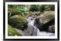 Tropical Stream , Framed Mounted Print
