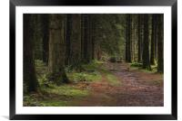 Woodland path into the forest, Taf Fechan Forest, Framed Mounted Print