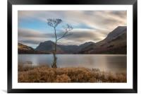 The Lone Tree at Buttermere, Framed Mounted Print