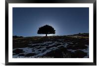 Lone tree under moonlight, Framed Mounted Print