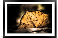 Leaf illuminated by the sun, Framed Mounted Print