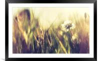Abstract dandelion, Framed Mounted Print