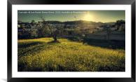 The fig tree, Framed Mounted Print