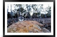 The forest in the crystal ball, Framed Mounted Print