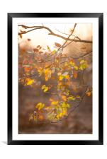 Mopane autumn, Framed Mounted Print