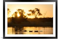 Hippos at sunset, Framed Mounted Print