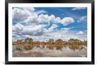 Rush hour at the waterhole, Framed Mounted Print