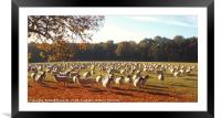 500 Sheep, Framed Mounted Print