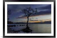 The Tree, Milarrochy Bay, Loch Lomond, Framed Mounted Print