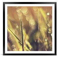 Beauty grass bokeh fantasy photo , Framed Mounted Print