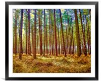 Tree Trunks, Framed Mounted Print