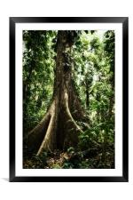 Ceiba Tree, Framed Mounted Print