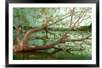 Wandering Branches, Framed Mounted Print