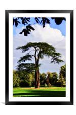 Lydiard Park, Swindon, Wiltshire, Framed Mounted Print