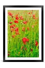 Poppy Field, Framed Mounted Print