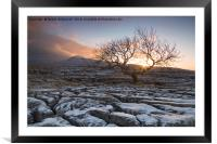 Tree at Twistleton Scar, Yorkshire Dales in winter, Framed Mounted Print