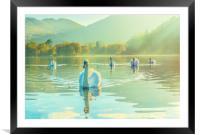 Swan Lake, Framed Mounted Print