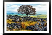 Ash tree and limestone pavement, Framed Mounted Print