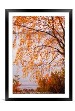 Autumn colours, Lake Pielinen, Framed Mounted Print