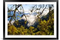 Cloud forest 2, Madeira, Framed Mounted Print